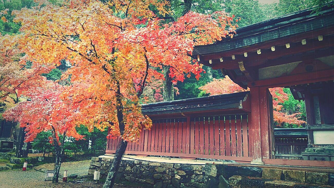 Kyoto 日帰り旅行 紅葉 紅葉狩り 神護寺