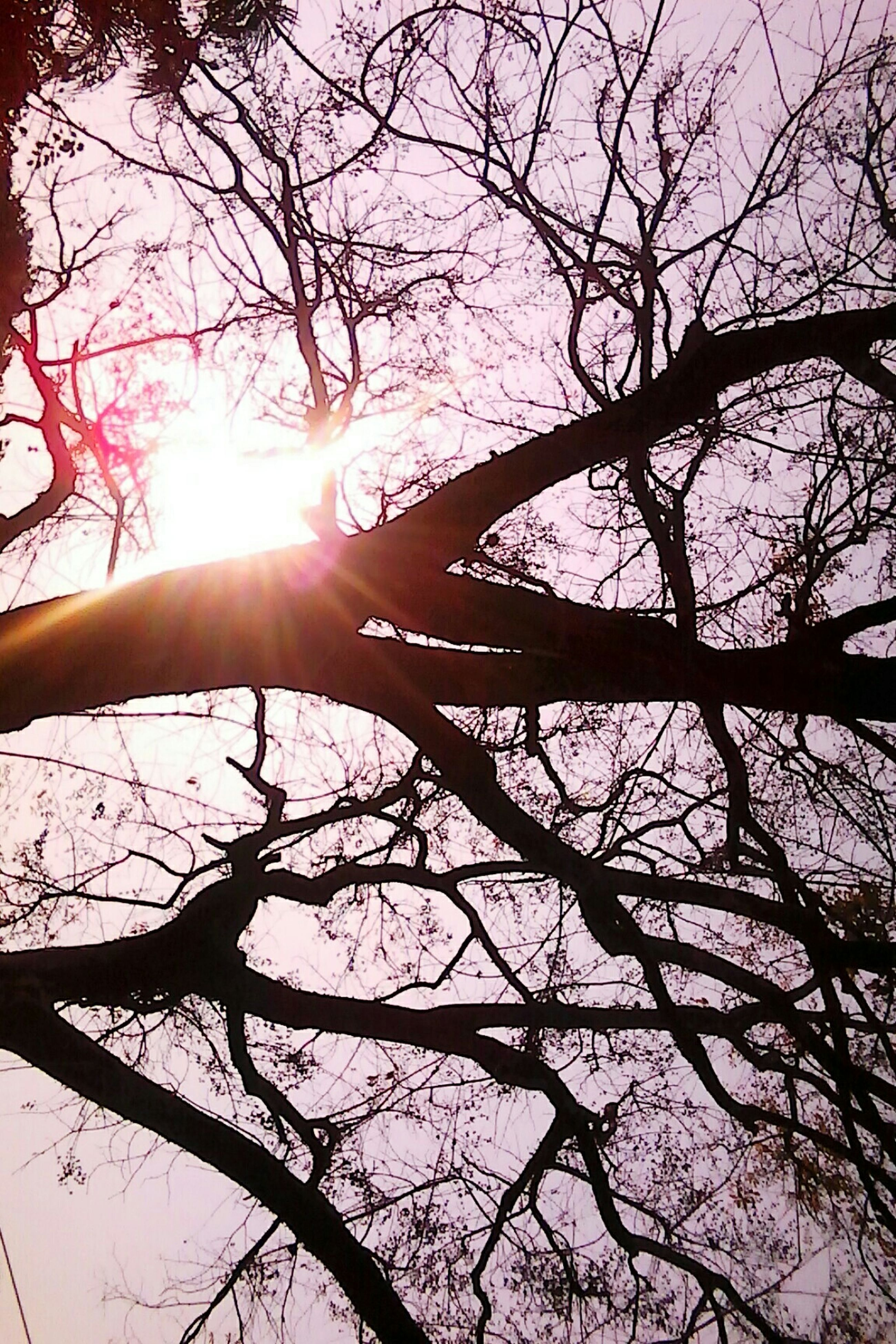 sun, tree, sunbeam, low angle view, lens flare, sunlight, branch, nature, silhouette, sky, bright, clear sky, bare tree, tranquility, beauty in nature, back lit, growth, sunny, outdoors, day