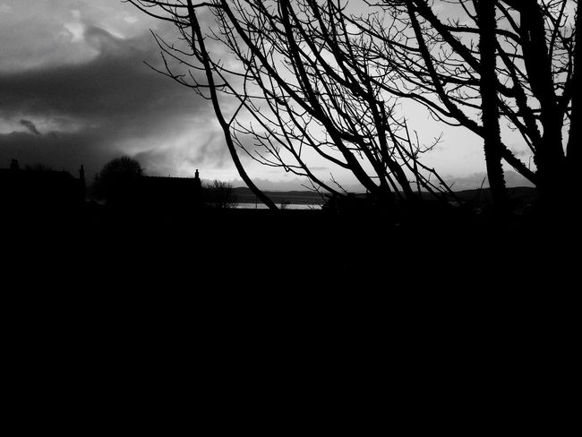 Silhouette Bare Tree Branch Tranquil Scene Tree Tranquility Sky Outline Dusk Scenics Cloud Tree Trunk Calm Growth Dark Beauty In Nature Solitude Outdoors Majestic