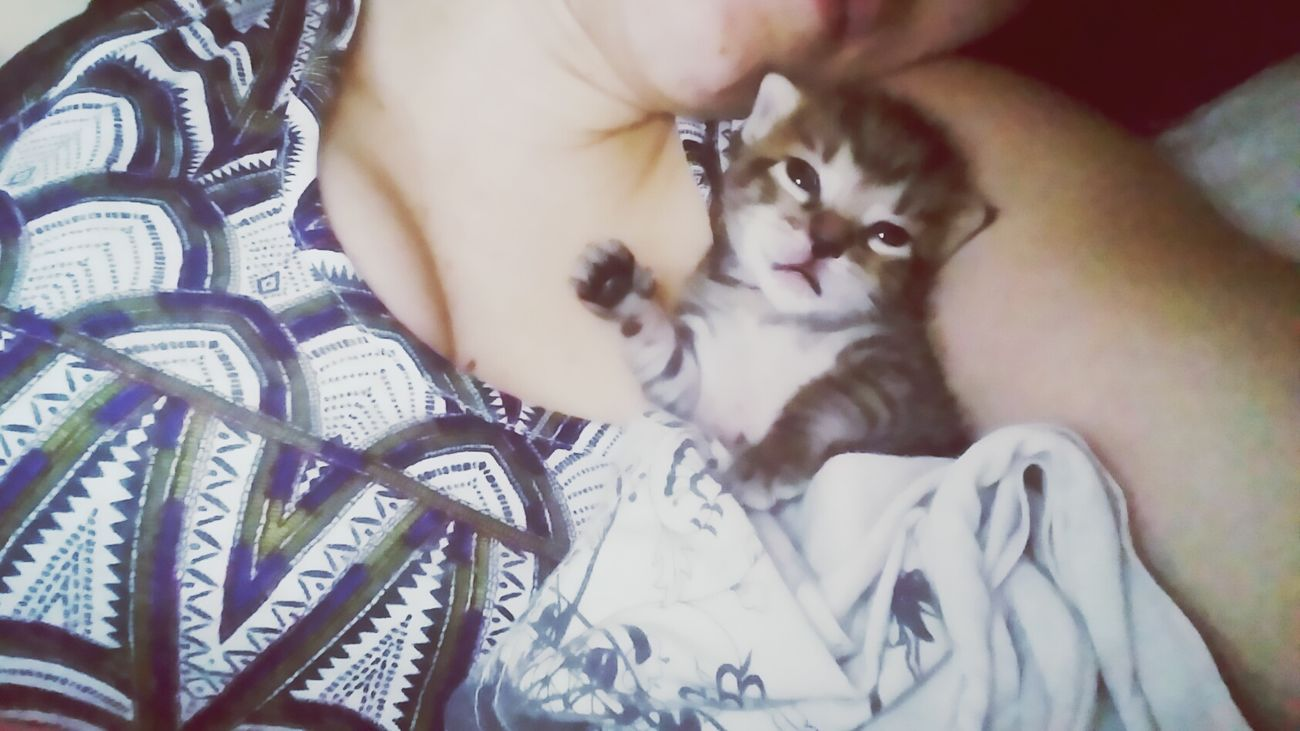 Taking Photos Hello World Relaxing Littelpet Mycat♥ Loveit Slepping Cat Babby Cat