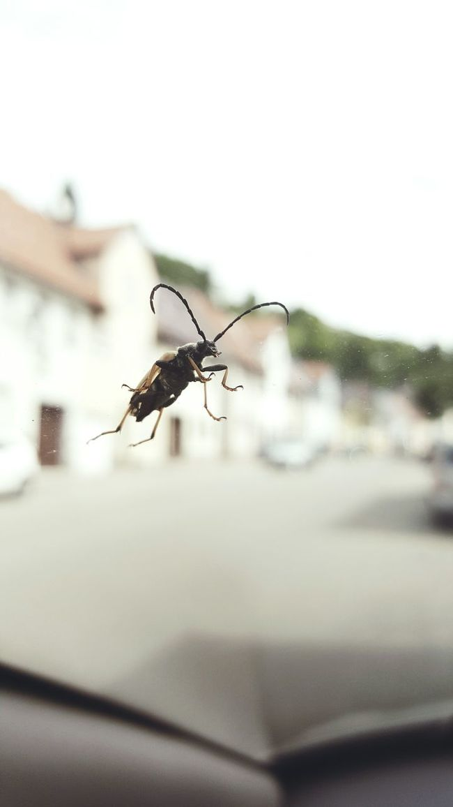 Look what i found at my car Front Shield 🙈 Insect Photography Insect Paparazzi Macro Window Windshield Panic