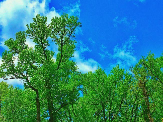 Trees sky nature theme