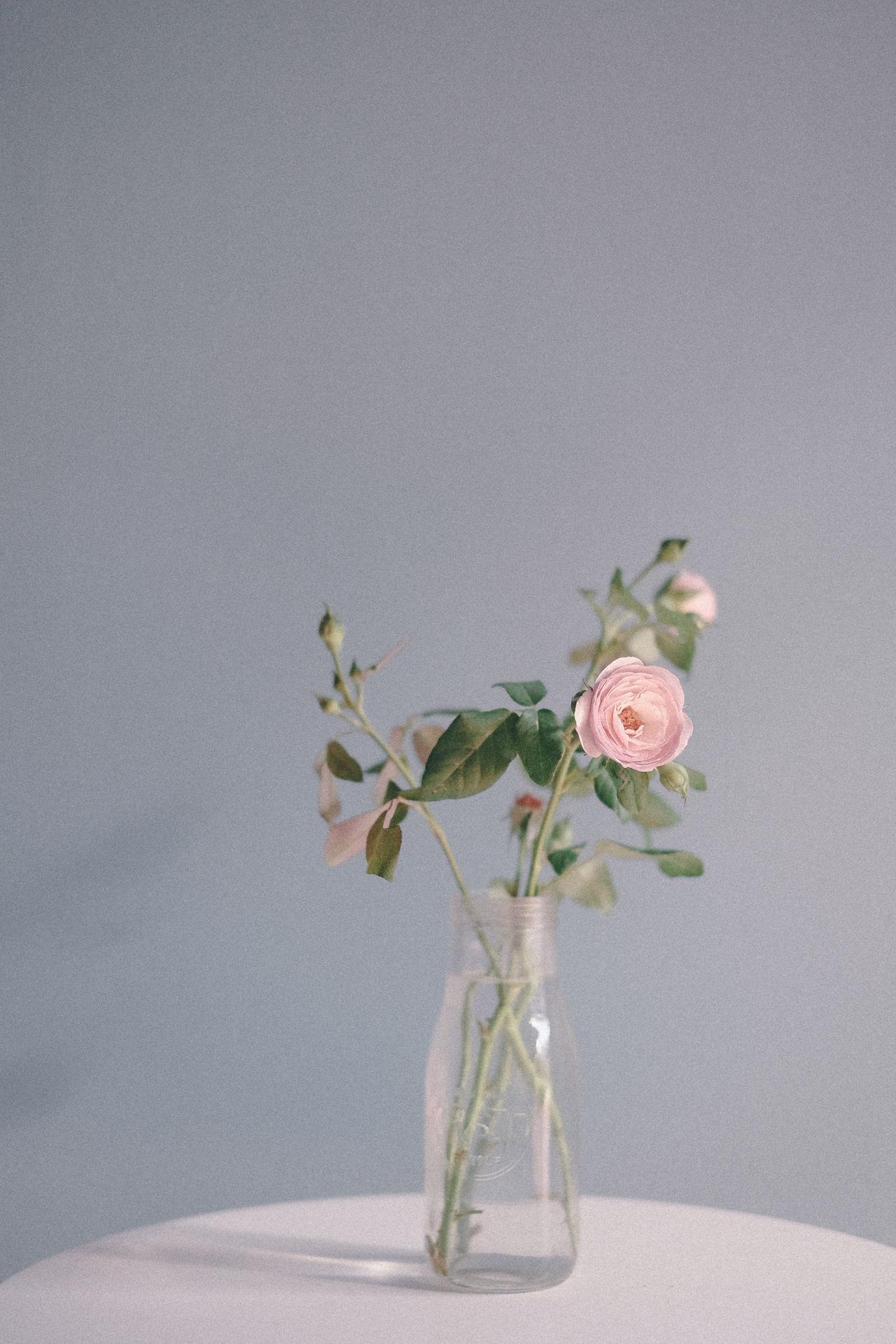 Beauty in nature :) Beauty In Nature EyeEm Nature Lover Flower Freshness Plant Roses Vase White Background
