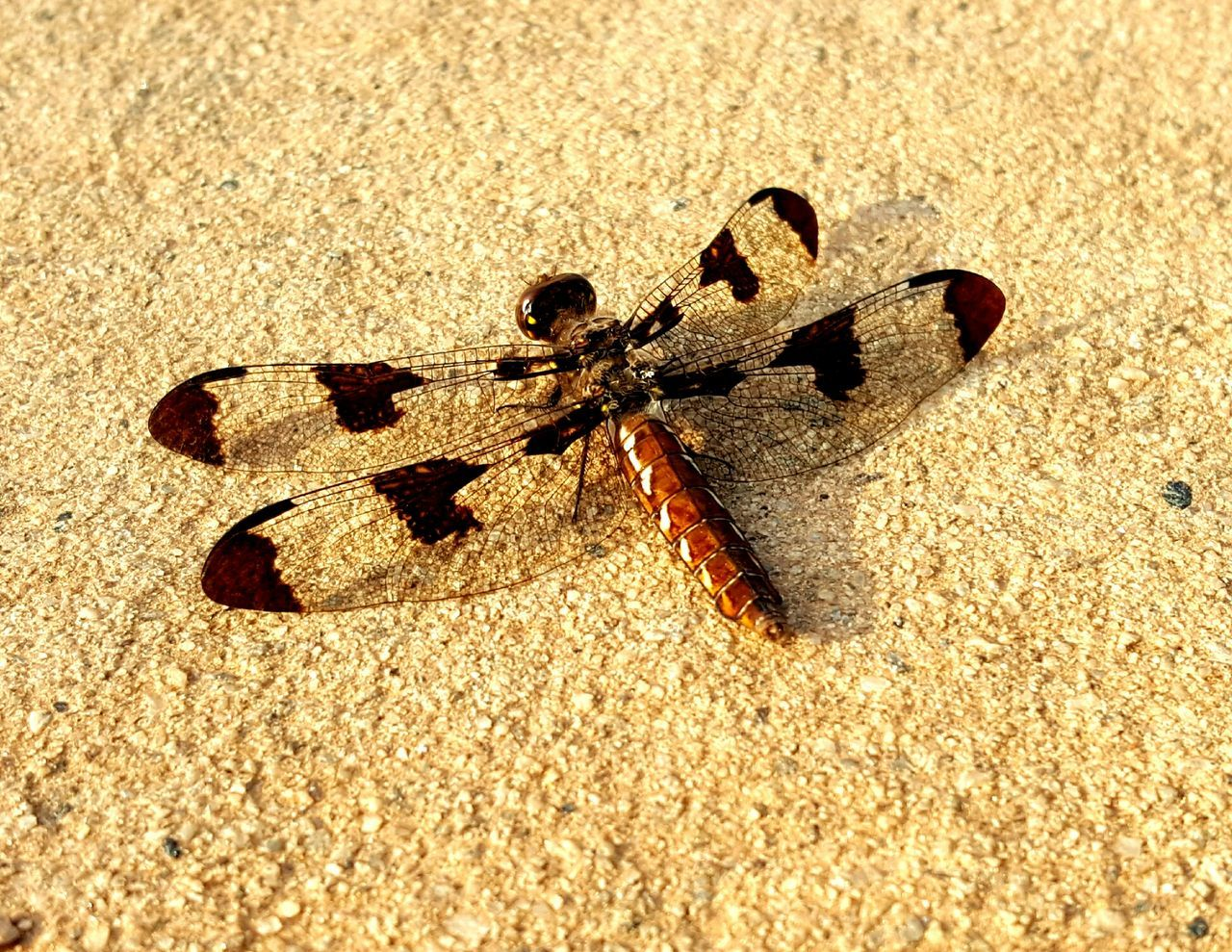 sand, sunlight, animal themes, one animal, insect, day, animals in the wild, outdoors, no people, beach, nature, close-up