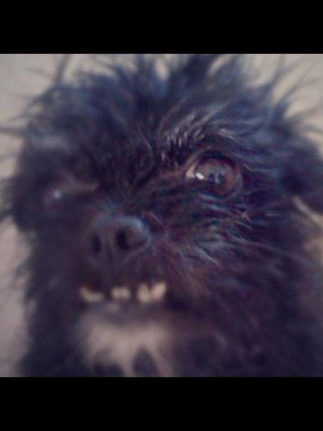 Pets Corner I Love My Dog Falcore Dog Ugly Cute