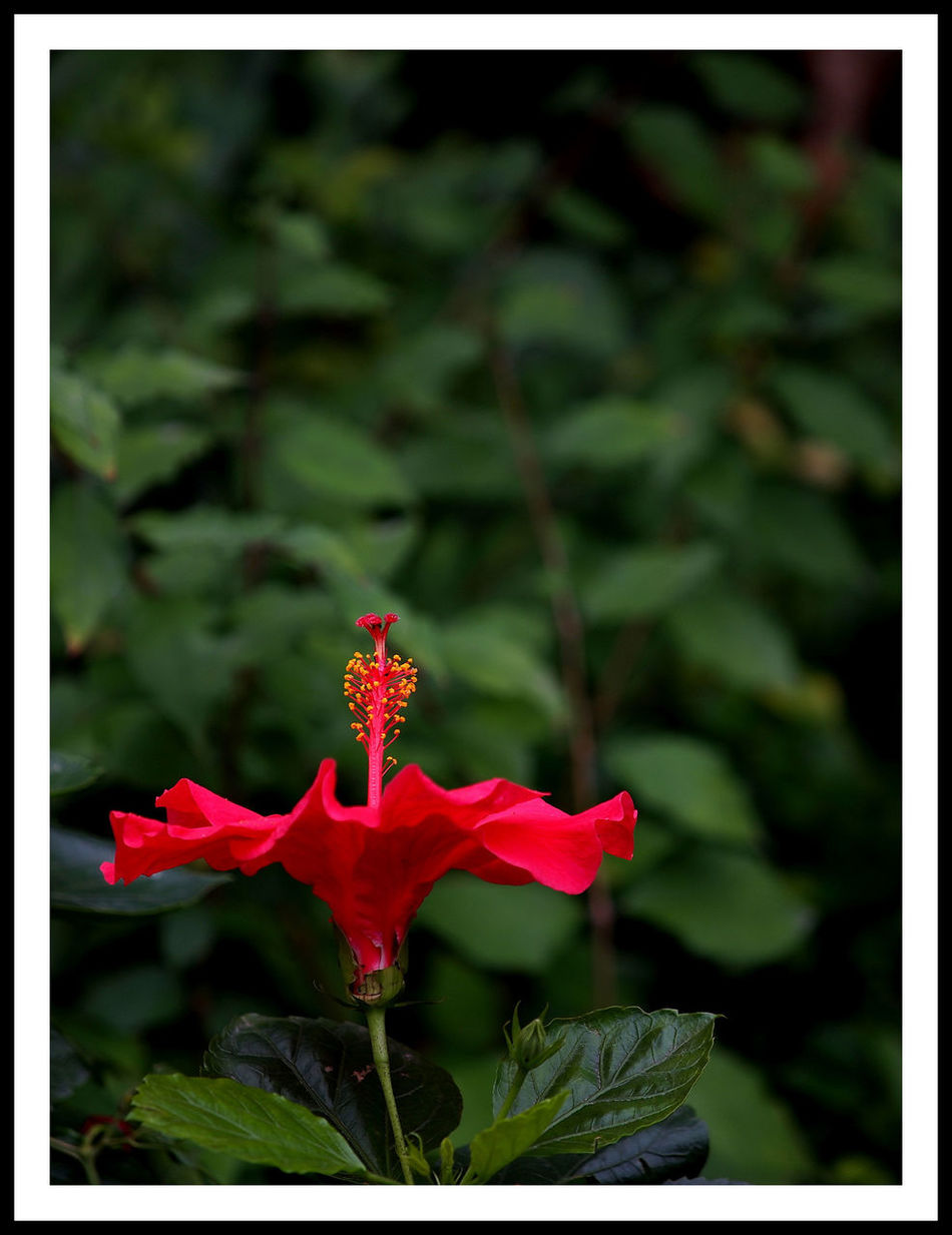 Olympus E5 Flower Taking Photos