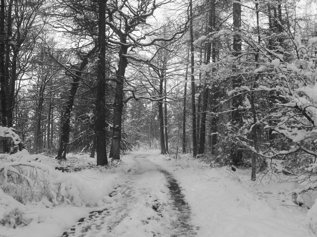 Snow Covered Pathway Amidst Bare Trees At Forest