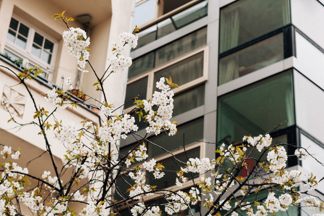 Berlin Spring I Architecture Beauty In Nature Berlin Berlin Photography Berliner Ansichten Blooming Blossom Branch Building Exterior Built Structure Close-up Day Flower Flower Head Fragility Freshness Growth Low Angle View Nature No People Outdoors Springtime Streetphotography Tree White Color
