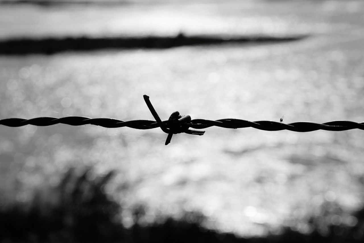 Taking Photos Check This Out Hello World Outside Outdoor Photography Nature Photography Limburg Black And White Photography Outside Photography Bnwphotography Barbed Wire Prikkeldraad Blurred Background Blurredbackground Background Blur Background Out Of Focus