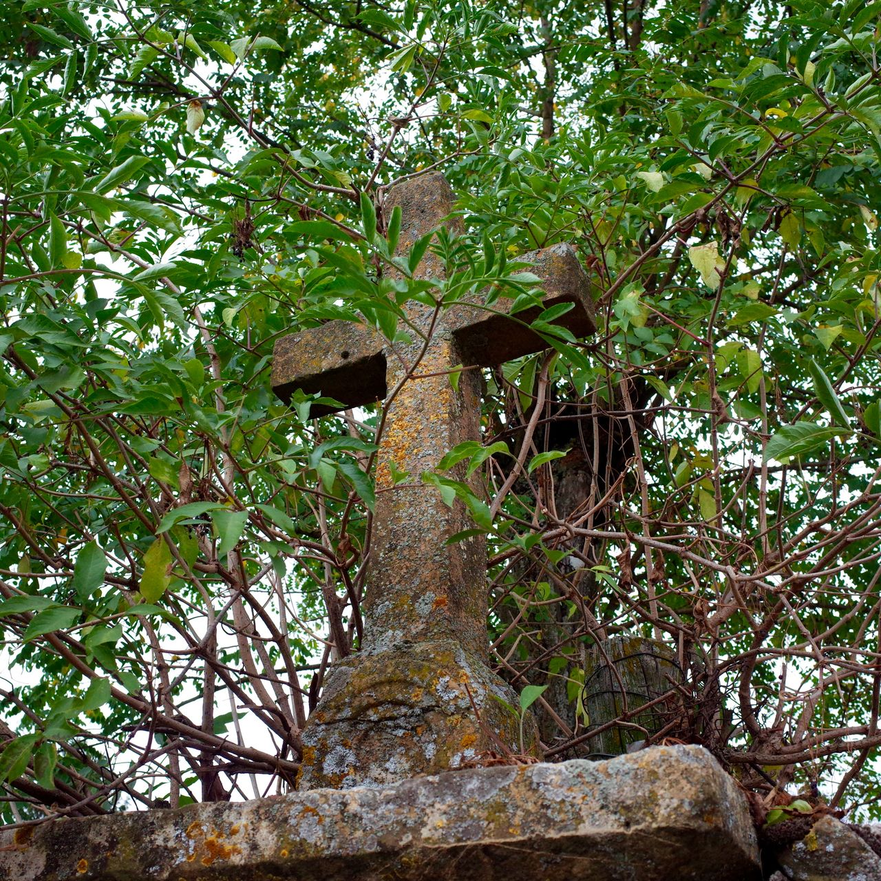 Low Angle View of Weathered Cross In Bushes