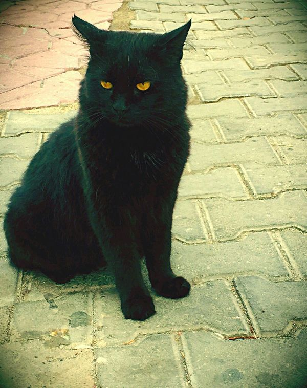 BLackCat Cat Lovers Catoftheday Cat♡ Cat Cats Catlovers Summertime From My Point Of View