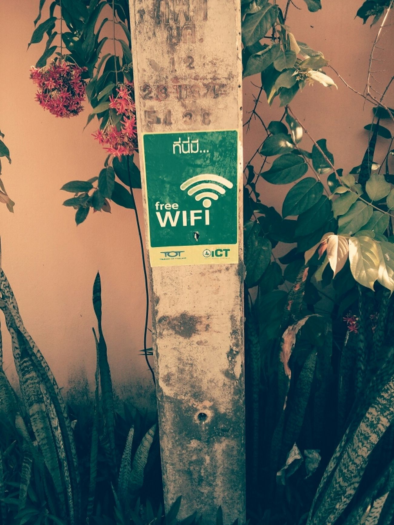Free Wifi Kus In Thailand