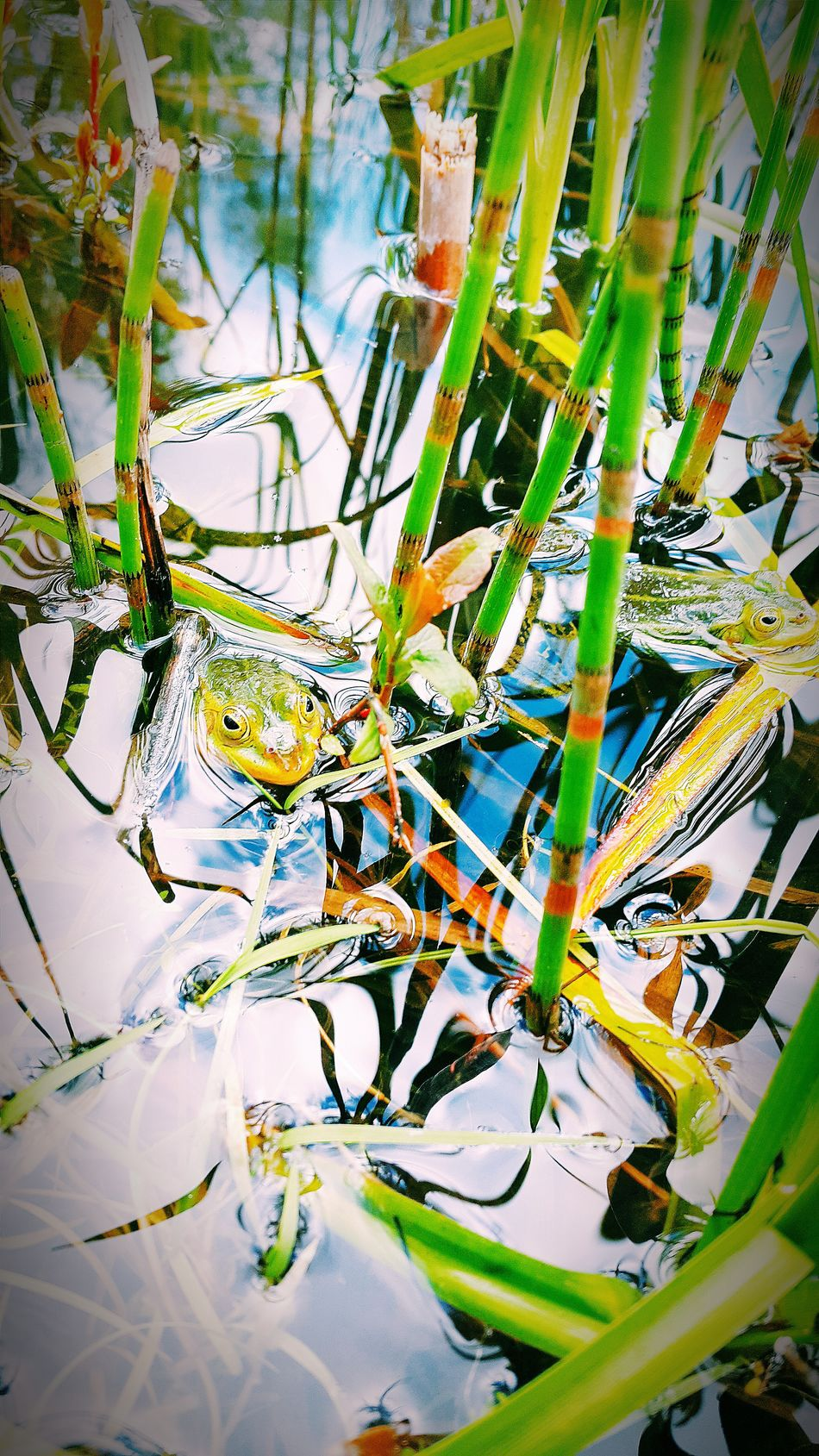 Taking Photos Nature_collection Nature Photography Mobile Photography Popular Photos Macro Photography Beautiful Nature Frogs Green Frog Mobile Artist