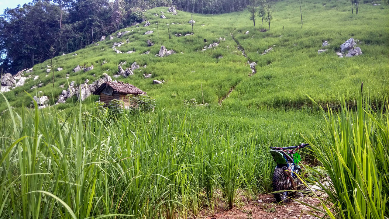 Manugal is rice paddy plantation system used by Dayak Meratus at South Kalimantan, the rice paddy are planted at hard and rocky soil at hill Agriculture Beauty In Nature Day EyeEmNewHere Farm Field Grass Green Color Growth Hut Landscape Motorcycle Nature No People Occupation Outdoors Paddy Field Plantation Rice Paddy Rural Scene Scenics Terraced Field Tranquil Scene Tranquility