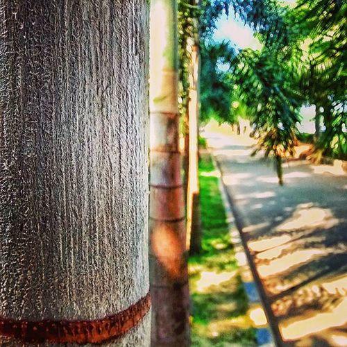 Tree Blur Focus Mymuse Mobilephotography VSCO Instagram Selectivefocus Treecontours Createcommune Agameoftones Igersnavimumbai _soi