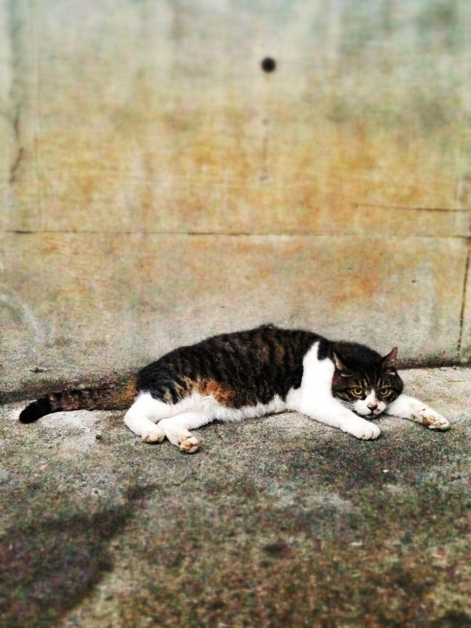 Beautiful stock photos of kitty, Alertness, Animal Themes, Cat, Day
