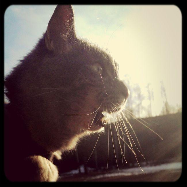 Cat love sun. Walking Nice Views Take A Break Taking A Break