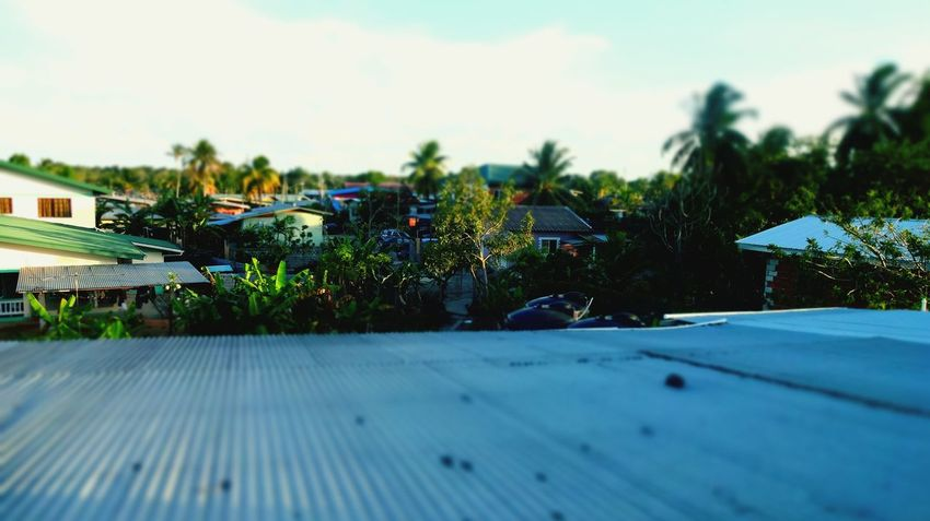 Trinidad And Tobago Trinidad Artsy Photography Focus On Macro Beauty Scenics Day Tropical Climate Beauty In Nature Rooftop View  Roof Flying High