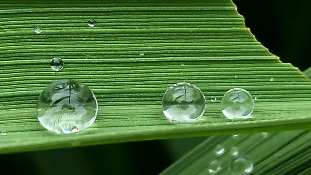 Dew #morning #drops #plant #nature Dewdrops_Beauty Dew Naturallovers Alamindonesia Naturelovers Pictureoftheday