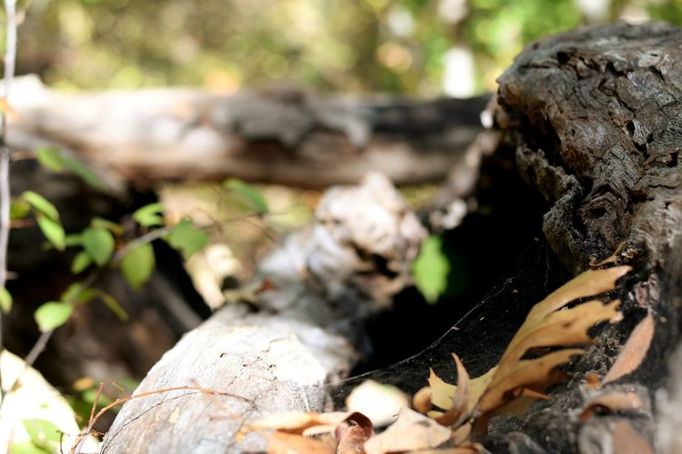 Nature Close-up Leaf Log Outdoors Forest Horizontal Day Beauty In Nature No People