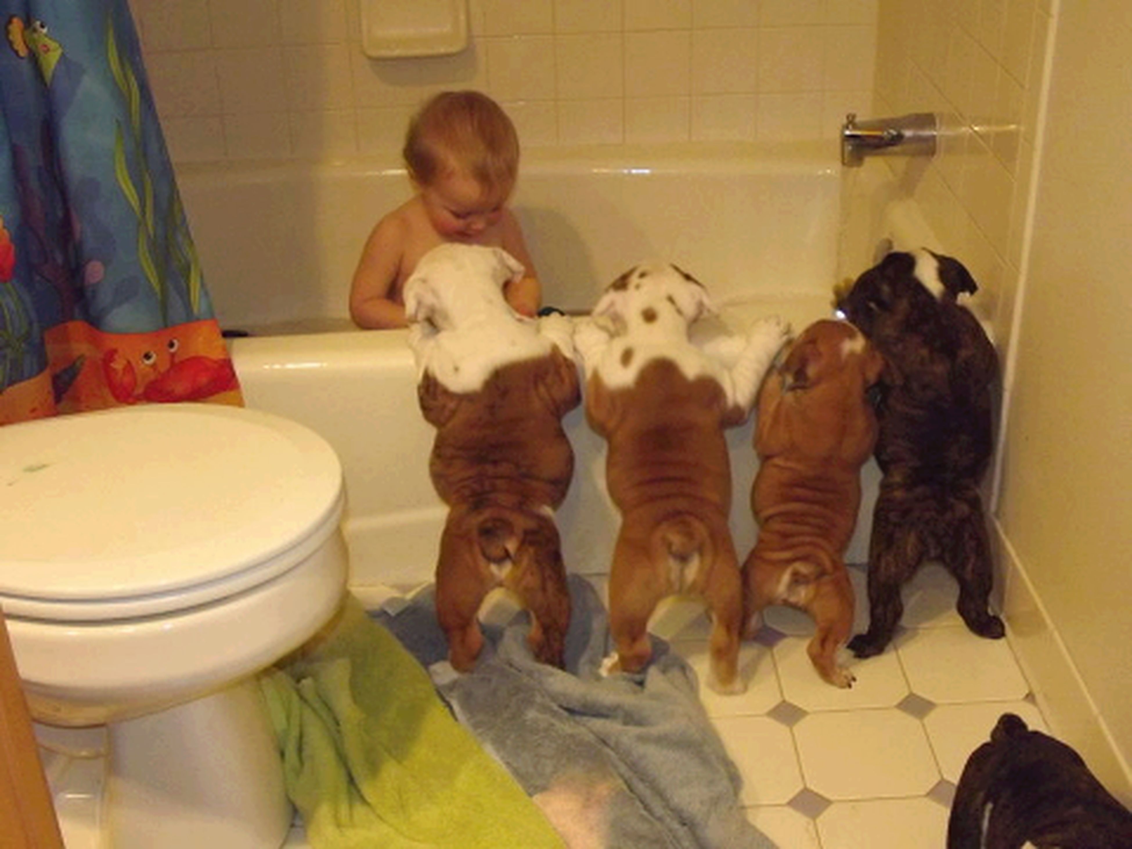 indoors, childhood, sitting, home interior, domestic animals, full length, person, pets, lifestyles, casual clothing, leisure activity, animal themes, mammal, high angle view, elementary age, bathroom, relaxation, standing