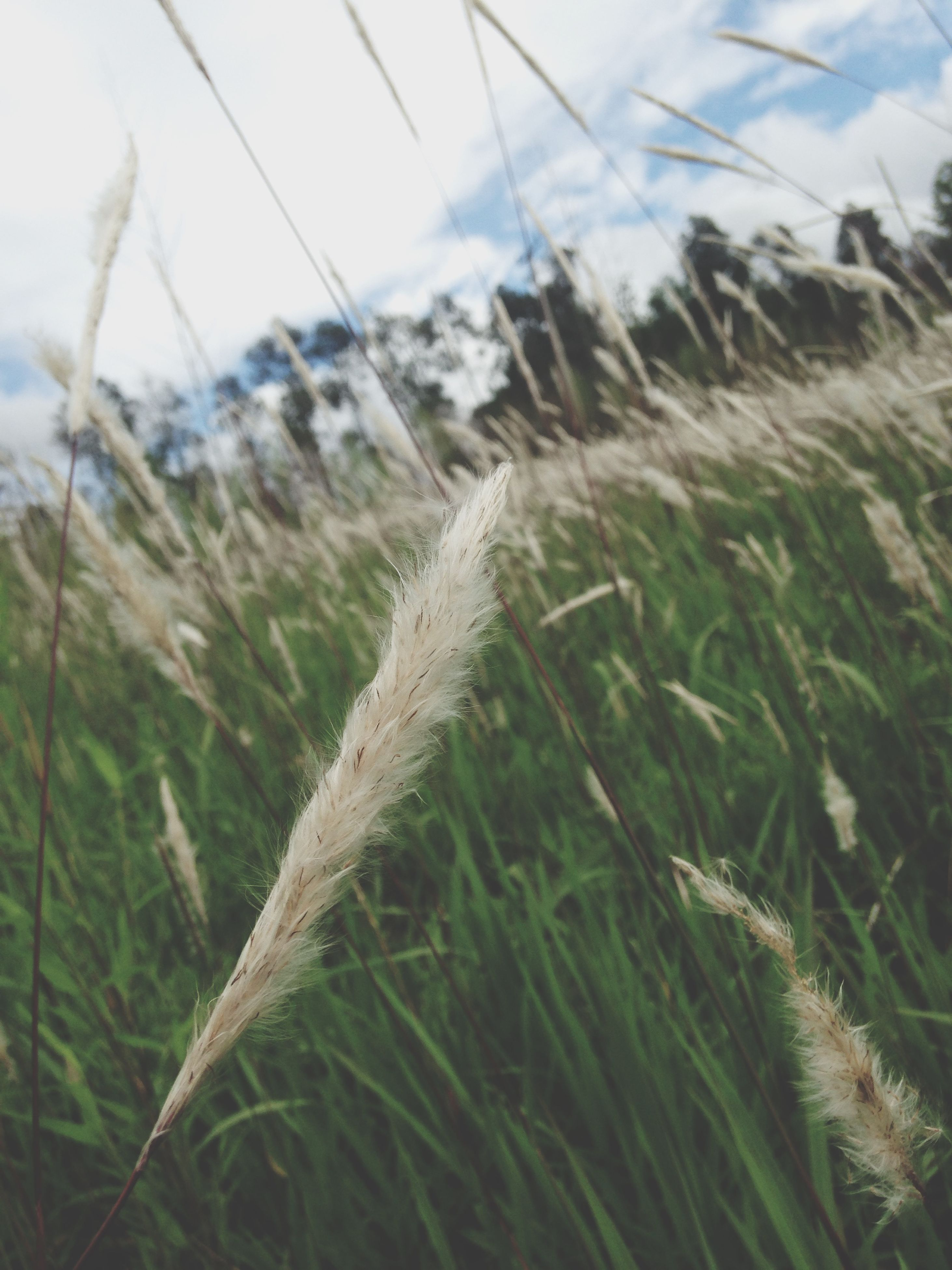 grass, field, focus on foreground, growth, plant, nature, close-up, tranquility, sky, selective focus, landscape, day, beauty in nature, outdoors, no people, tranquil scene, weather, growing, rural scene, scenics
