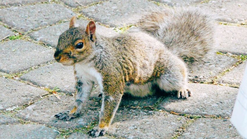 Wild Life Animals In The Wild Mammal Squirrel Animal Wildlife Animal Themes Nature One Animal Animals In The Wild Animal Squirrel Squirrels Life Woods Small Animal Hairy