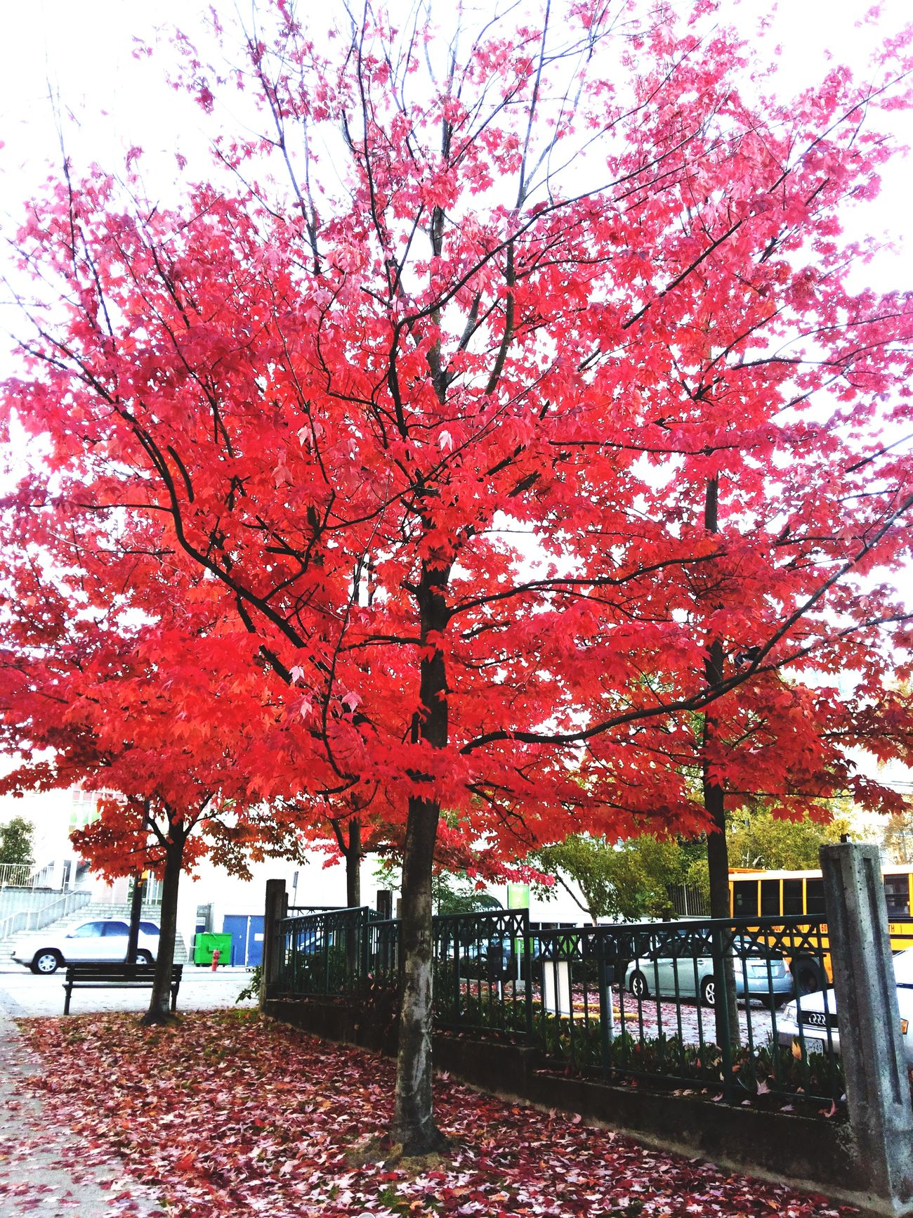 Dark Pink By Motorola Vancouver Downtown The Red Tree