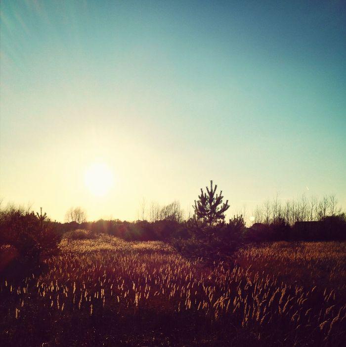 Sunset Enjoying Life Want More