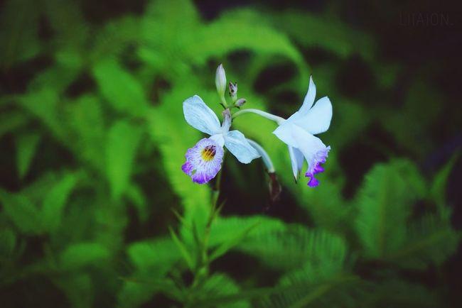 White & Green Orchid White&green Flower Nature Enjoying The Sun Good Morning Enjoying Life Enjoy The Little Things