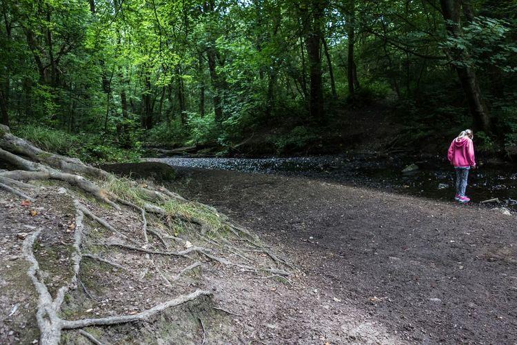 Woodland glen A Walk In The Woods Woods Hindley Wigan Lancashire