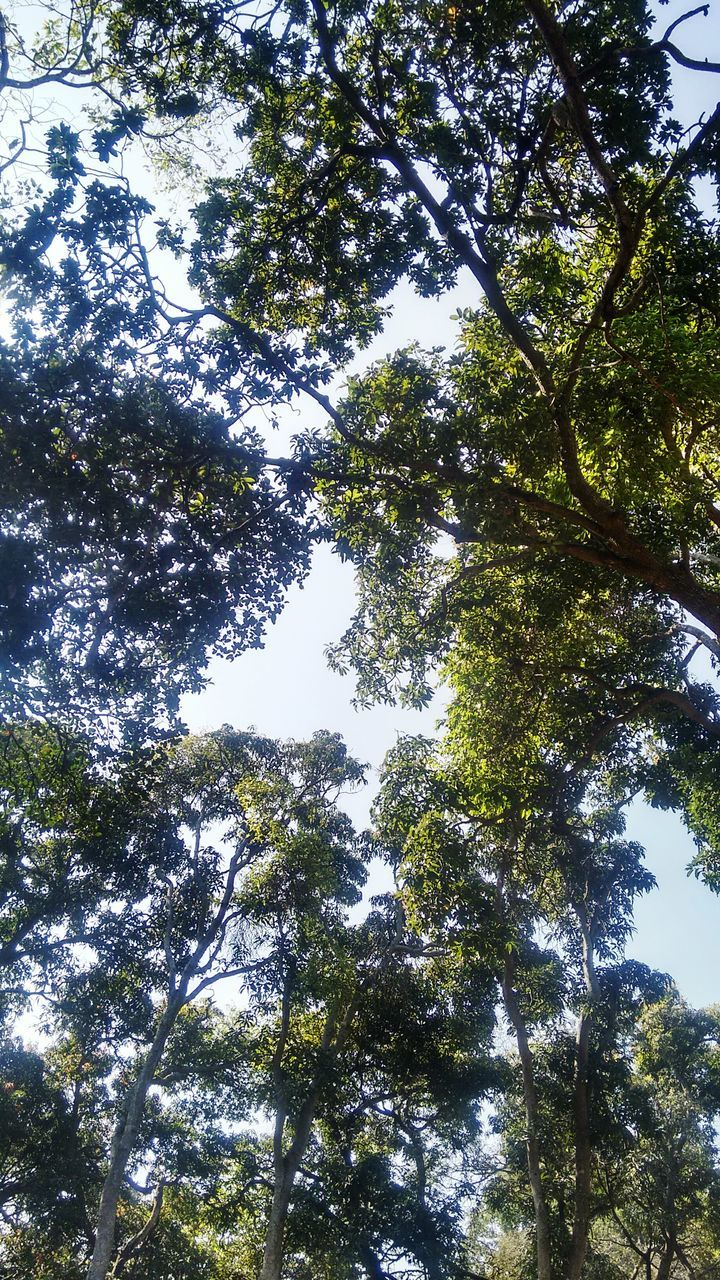 tree, low angle view, nature, growth, beauty in nature, forest, day, tranquility, no people, green color, outdoors, scenics, branch, sky