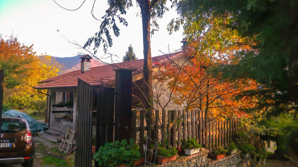 Multi Colored Liquidambar Colors Autumn Color Explosion In The Wood Countryhouse Countrystyle Athomeinthewood Athomeinthemountains StonexOneGalileo Garden Photography At Home Sweet Home Mygardentoday Autumn Colors Orange Color Tranquility Beauty In Nature