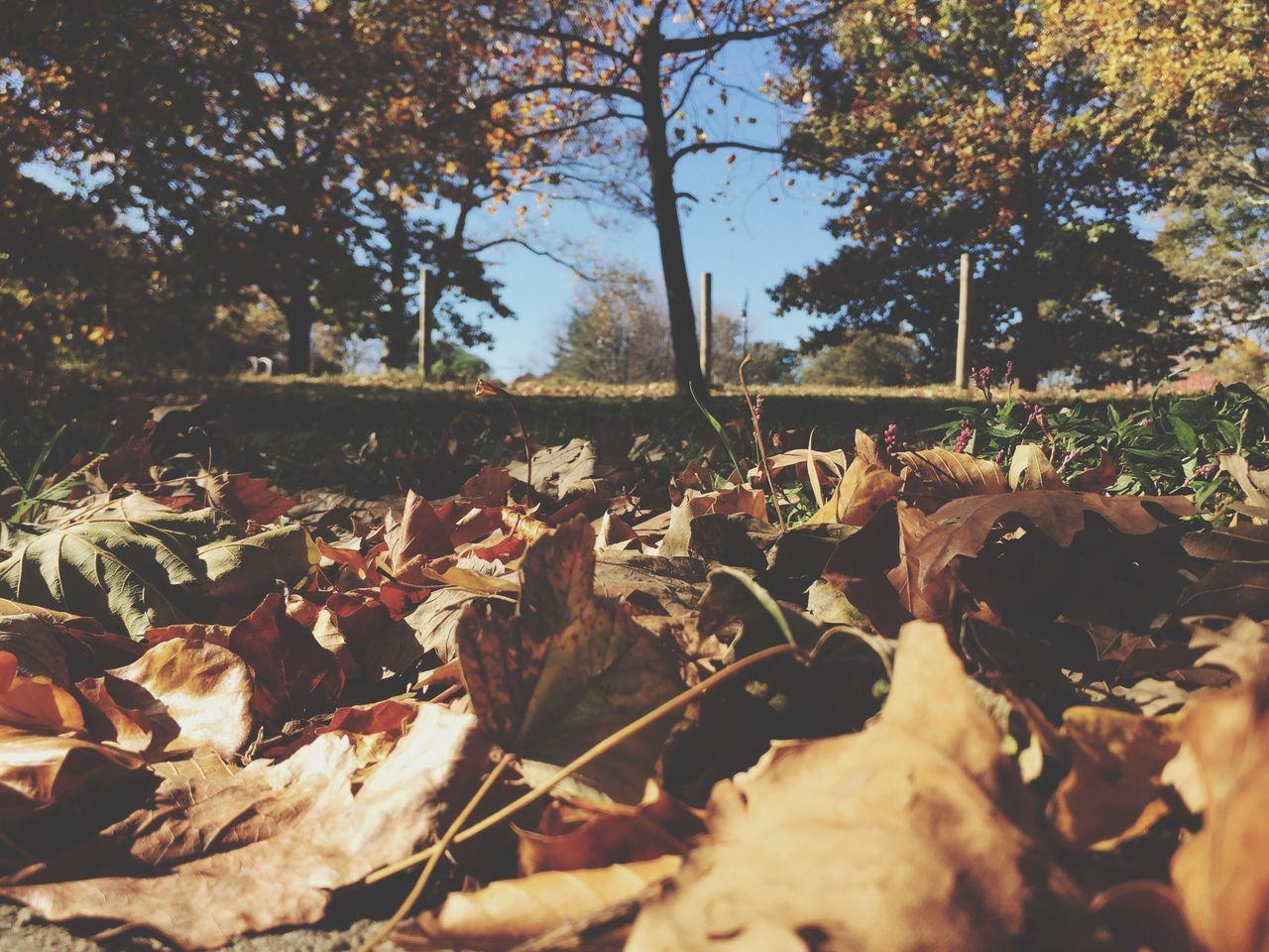 Fall, oh how I love thee Fall Prospect Park Brooklyn New York City
