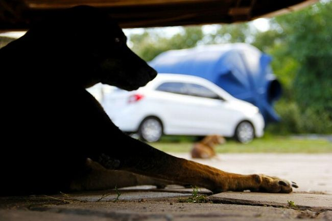 Aninal De Rua Animals Animais De Rua. Animaisderua Animais Abandonados Animais. Animais Dog Dog Of Street