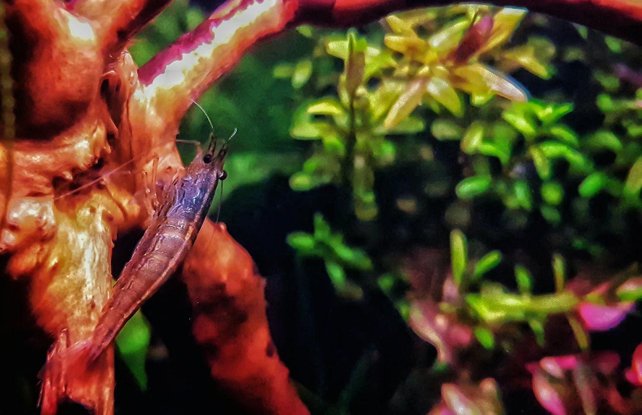 Close-up Nature Outdoors Beauty In Nature Nanotank Samsung Galaxy S7 Edge Green Color Aquarium Aquarium Photography Amano Shrimp