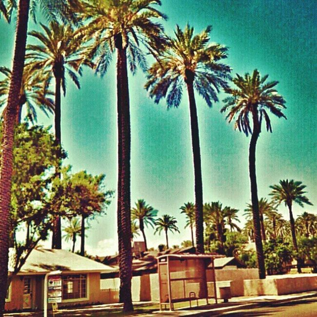 This was a day for a drive! :) Instagramaz Igersphx Igersonly Desertlivin Citylifeinaz Instagramhub Palmtrees Busstop Houses Blueskies BrightDay Nature @arizonaskies @ibeautyofnature Drivebyphoto PixlrExpress