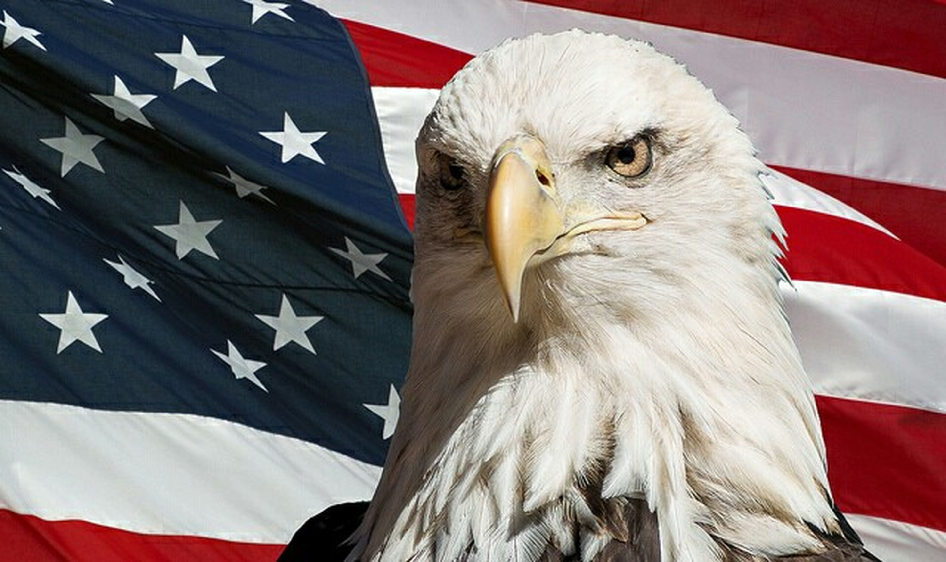 patriotism, flag, white color, beak, bald eagle, close-up, blue, portrait, bird, eagle - bird, red, no people, day, bird of prey