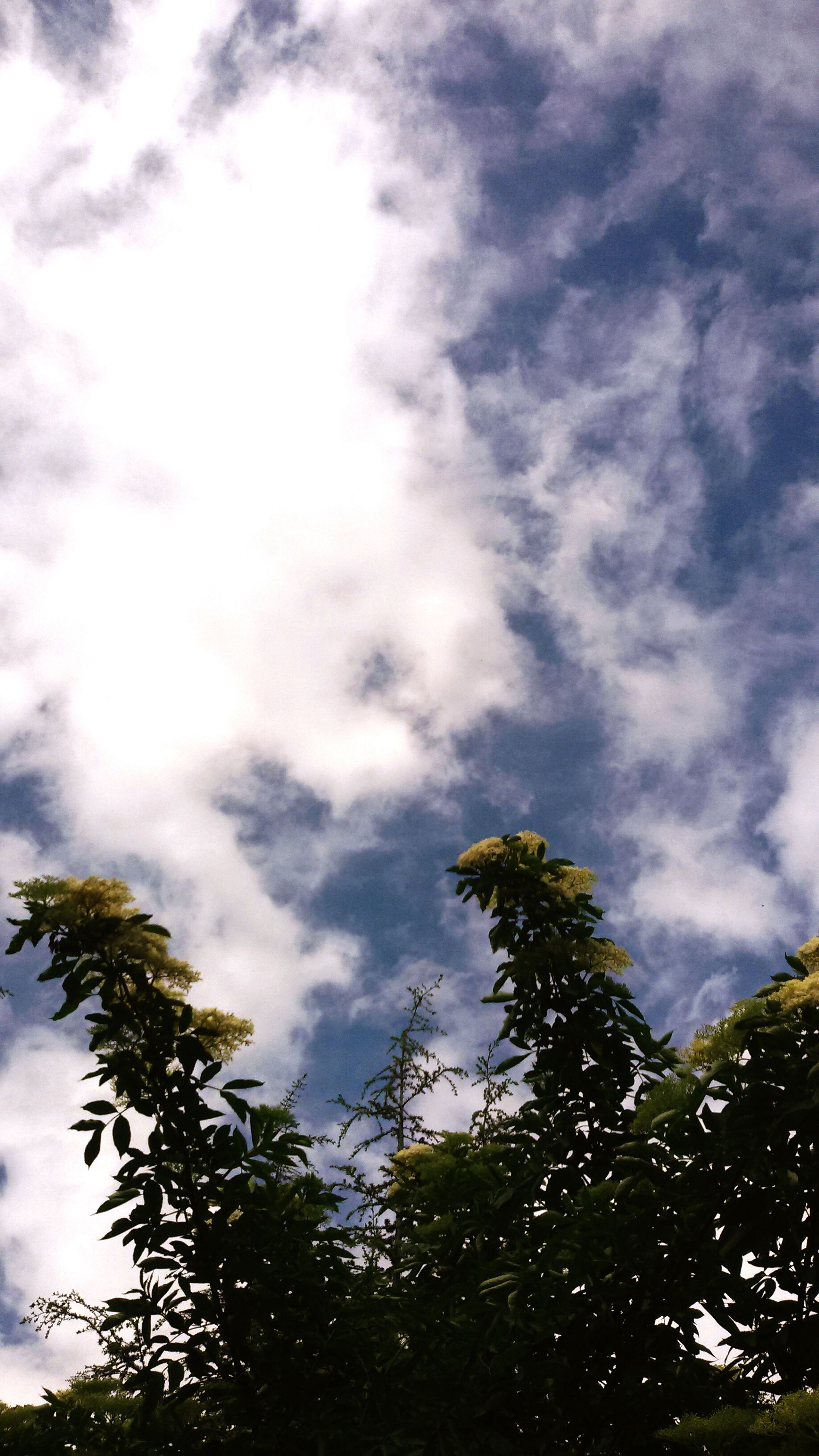 low angle view, sky, tree, cloud - sky, cloudy, tranquility, beauty in nature, nature, growth, tranquil scene, scenics, cloud, weather, day, branch, overcast, outdoors, no people, idyllic, treetop