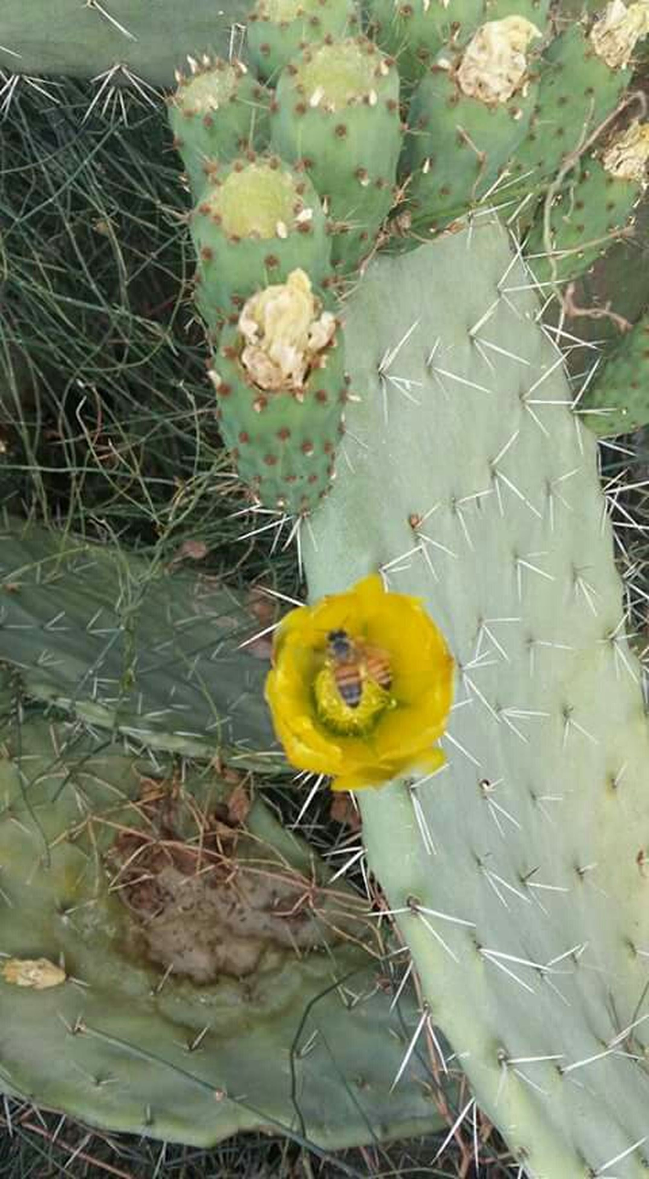 yellow, flower, plant, growth, fragility, high angle view, leaf, freshness, nature, beauty in nature, close-up, day, flower head, cactus, outdoors, no people, petal, stem, thorn, green color