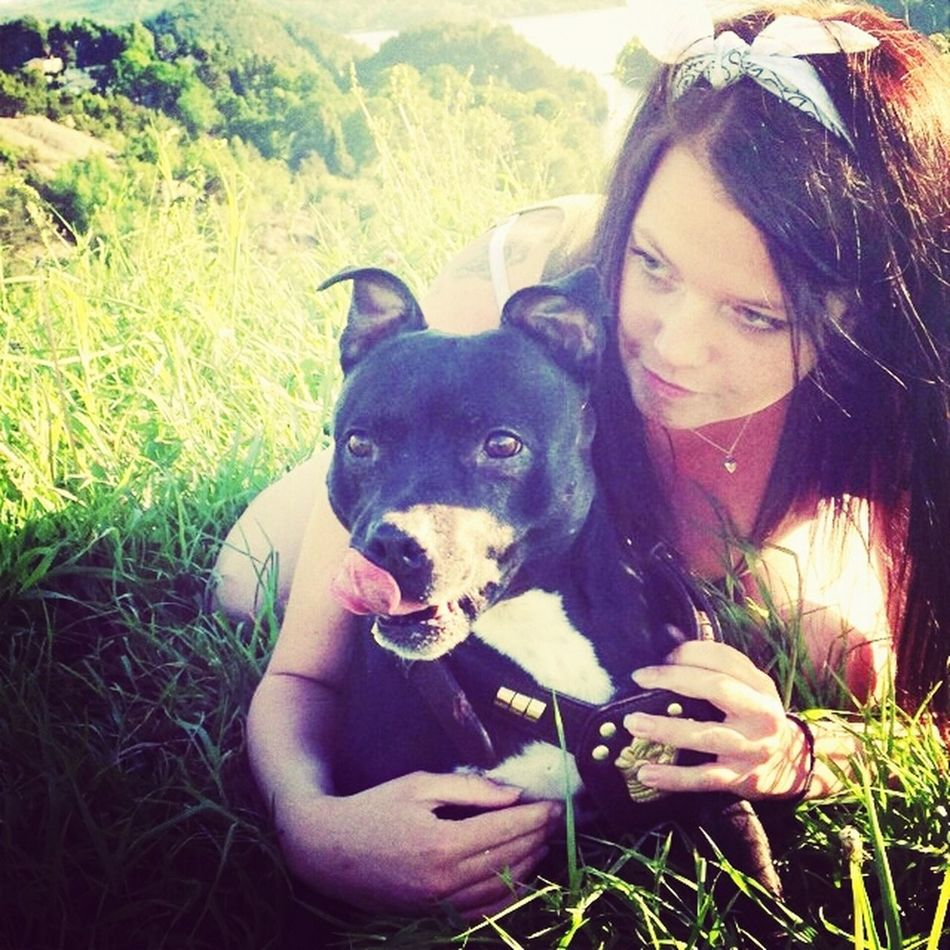 Staffordshire Bull Terrier Summer Time ☀ Summer Love ∞ Dog Days Of Summer