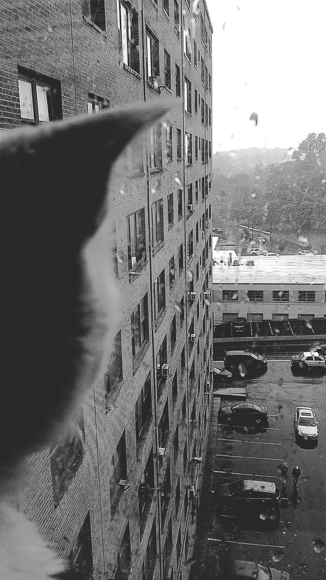 Blackandwhite Photography Silouette Of A Cat Silouette And Shadows Raindrops Looking At Things Blahh ! Shitty Day