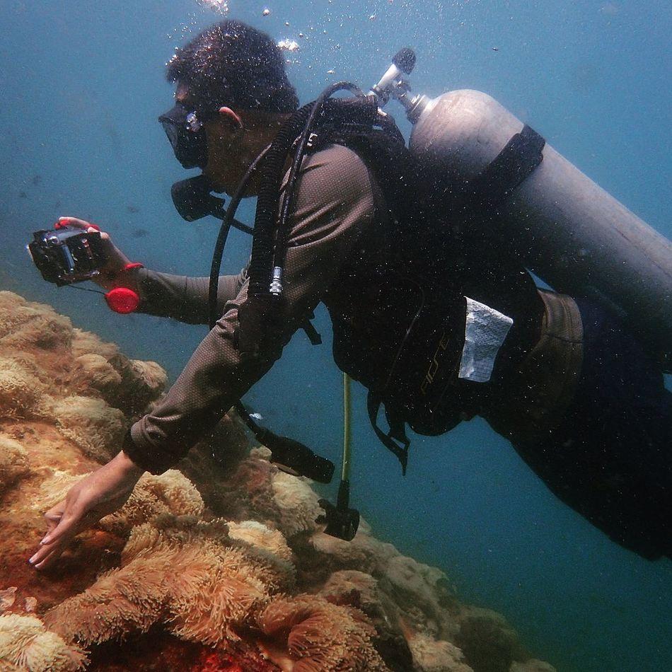 Diving Scuba Diving