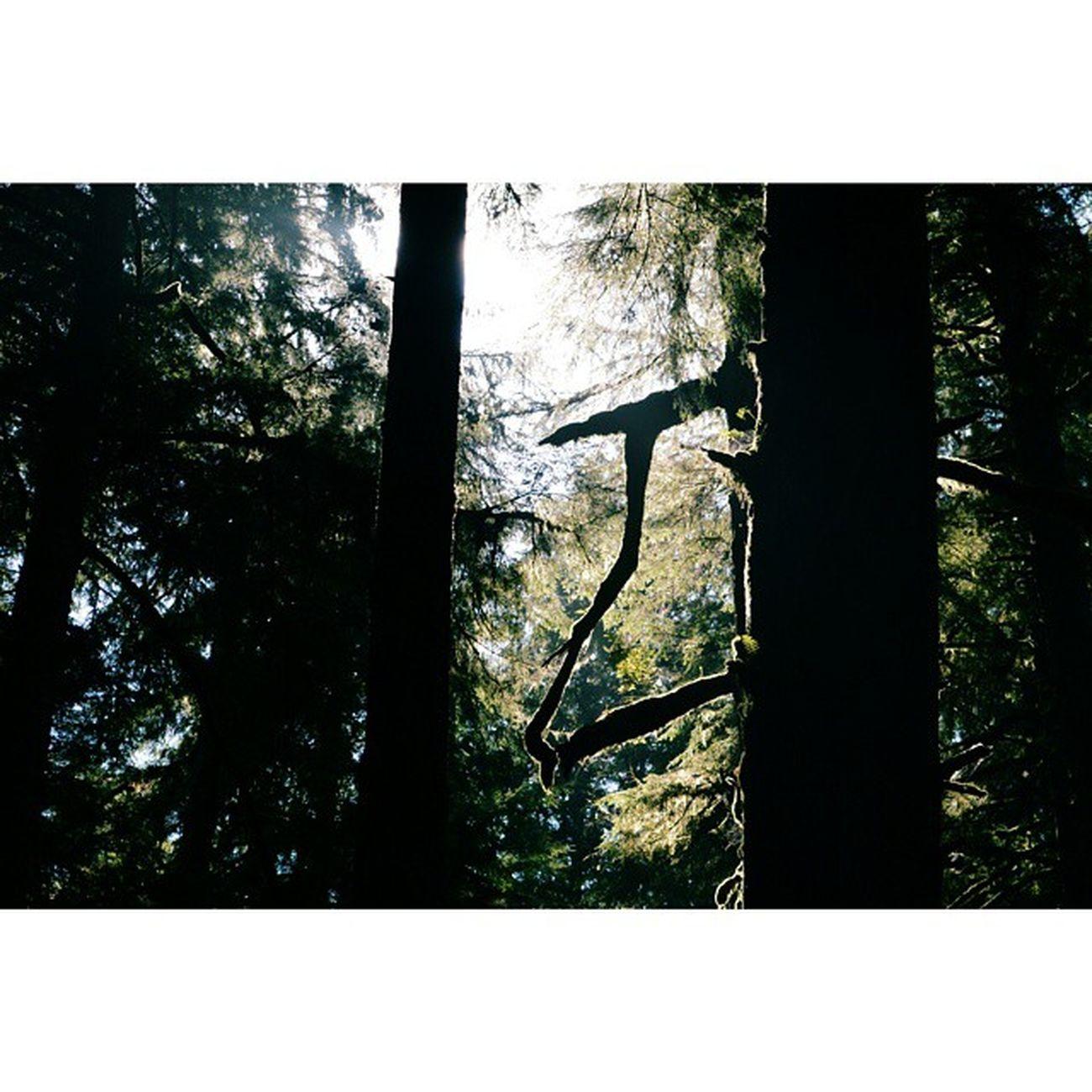 Olympicnationalpark PNW Thegreatpnw Washingtonstate Trees Forest Shadows Capturinglight Vscocam VSCO Nikond3200