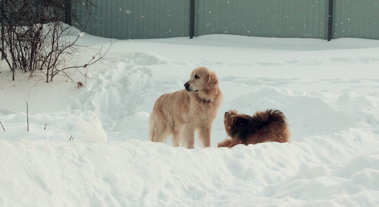 Beautiful stock photos of welpen,  Animal Family,  Animal Themes,  Animal Wildlife,  Animals In The Wild