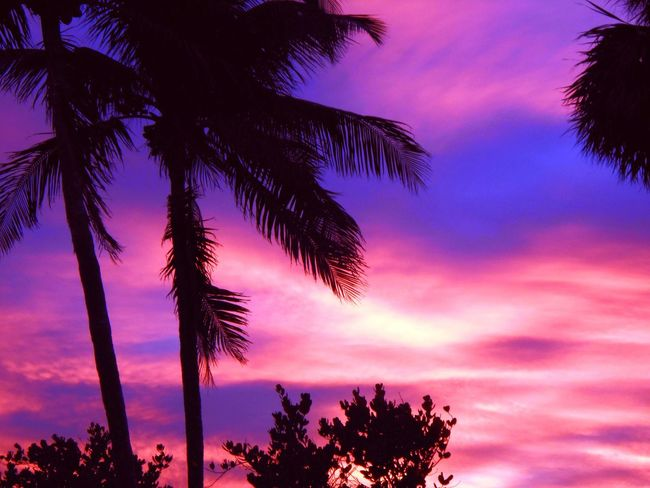 Florida Sunset Nature Nature Nature Photography Nature_collection Palm Tree Palm Tree Palm Tree Silhouette Palm Trees Pink And Purple Pink And Purple Clouds Pink And Purple Skies Pink Sunset Scenics Skies Skies And Clouds Sky Sunset Sunset And Clouds  Sunset And Palm Trees Sunset Silhouettes Sunset_captures Sunset_collection Tranquility Colour Of Life