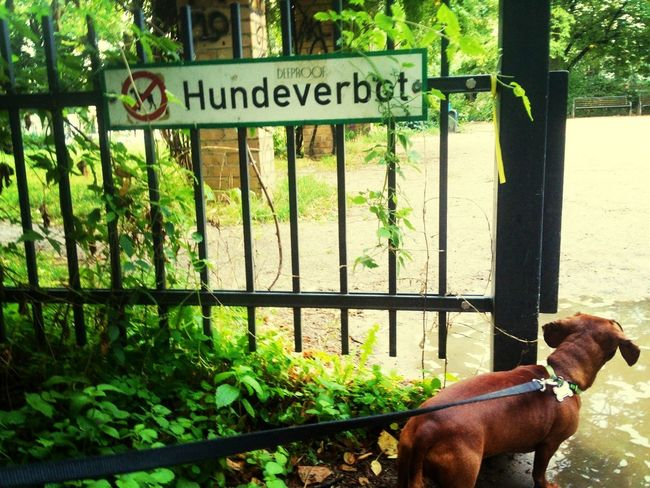 little wannabe rule breaker! Rebel Forbidden Dog Sauce & Magoo: The Album
