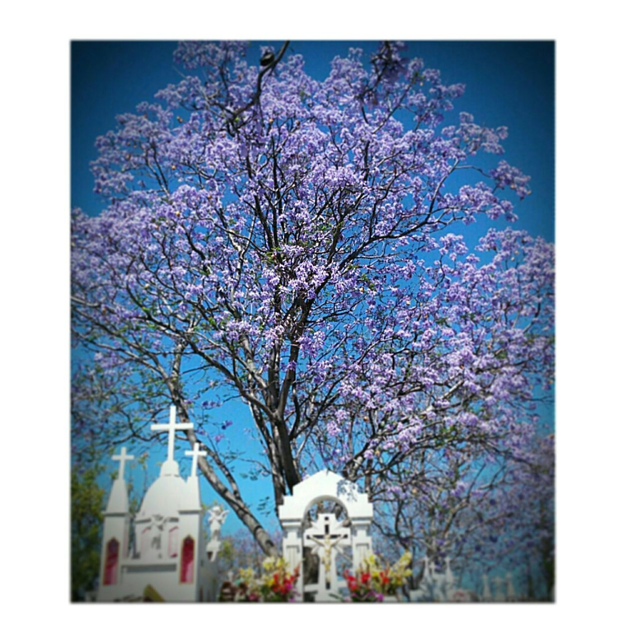 The Tree Above my Grandparents Grave in Lapiedad Michoacan Mexico . Prettytree Colorful . Mixemotion