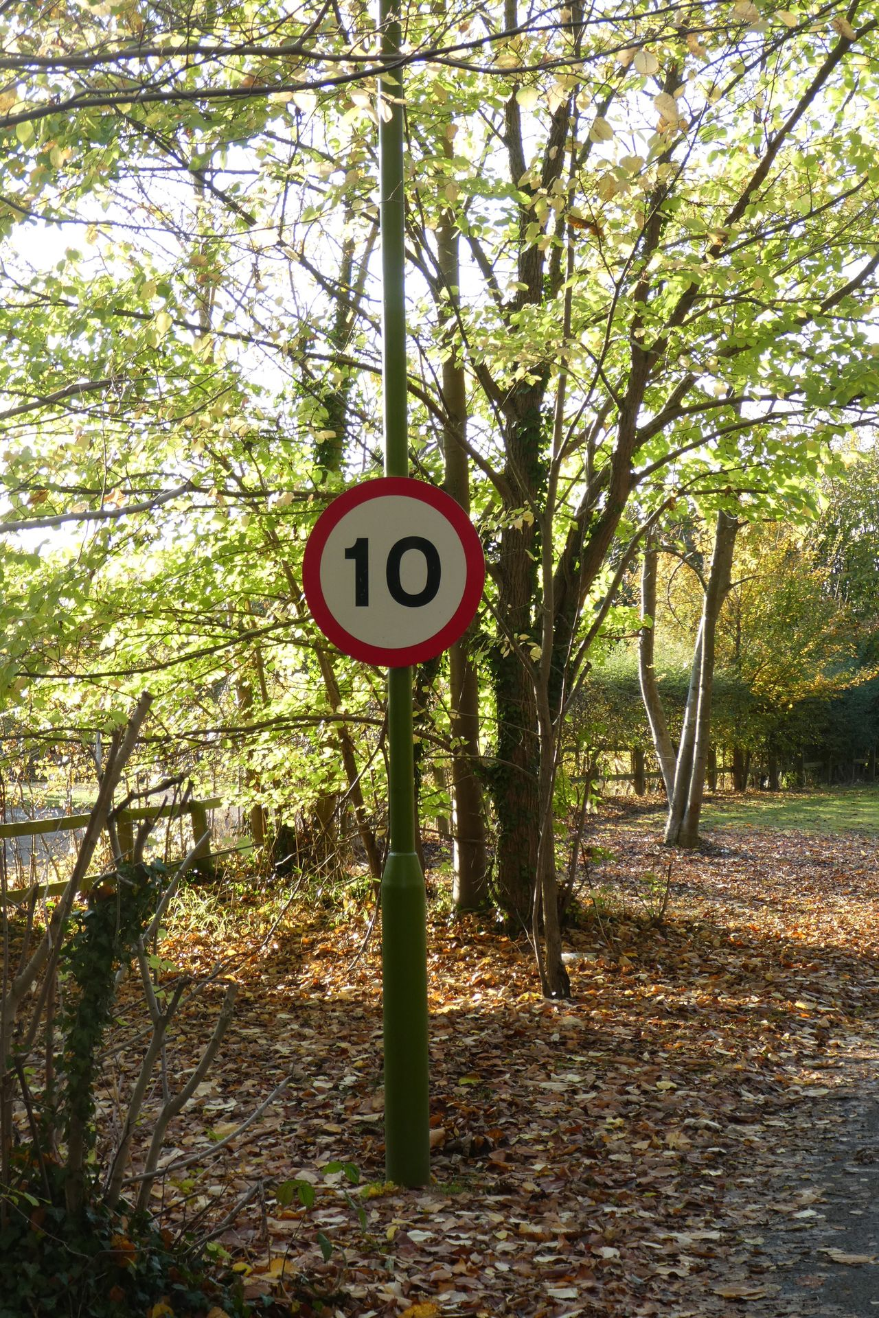 Tree Communication Guidance Road Sign Outdoors Speed Limit Sign Day Nature No People Forest Sky Autumn
