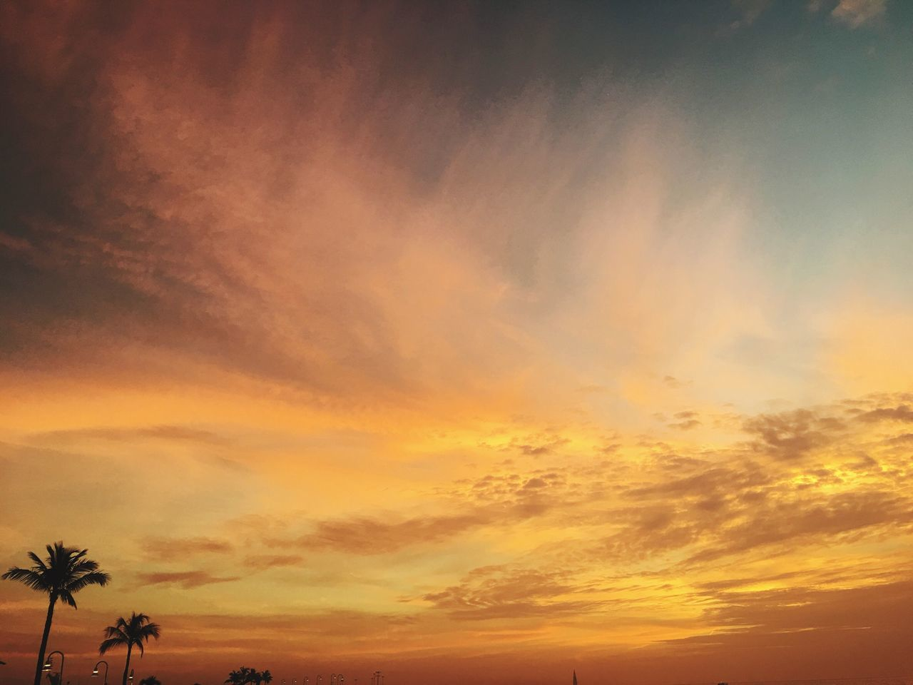 sunset, orange color, beauty in nature, cloud - sky, nature, scenics, sky, silhouette, tranquil scene, tranquility, dramatic sky, no people, tree, outdoors, low angle view, palm tree, day
